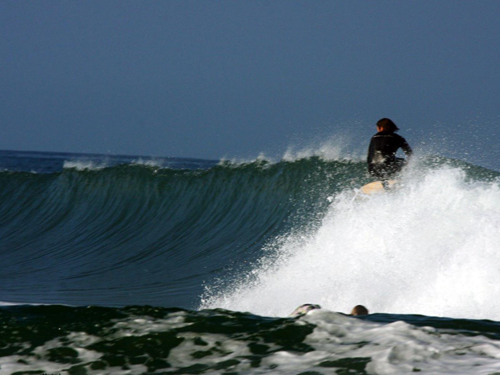 surfing-cap-ferret